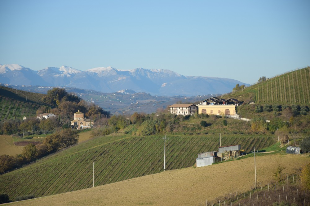 Image of Vignoble Ecologic en Italie Central