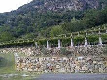 Image of Vigneti e Villa nella Piedmonte