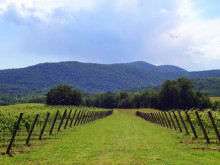 Image of Leeds Manor Vineyards, Virginia for Sale