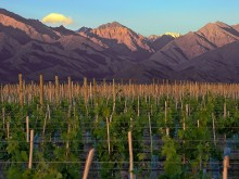 Image of Winery for Sale in Mendoza- Argentina