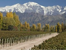 Image of Winery and Finca, 10 hectares Vista Flores, Tunuyán Mendoza