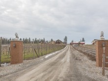 Image of Boutique 3-acre Vineyard for Sale Colbert, WA