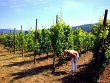Image of Mount Baker Vineyards for Sale