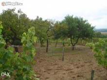 Image of Vineyard for Sale in Villány Region