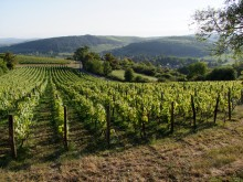 Image of Vineyards for Sale in Burgundy