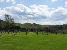 Image of Firefly Hill Vineyards for Sale in Virginia