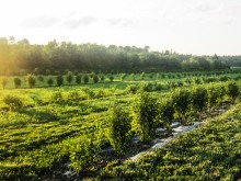 Image of The Only Haskap Com. Winery in the World