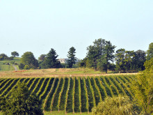 Image of Barrel Oak Winery