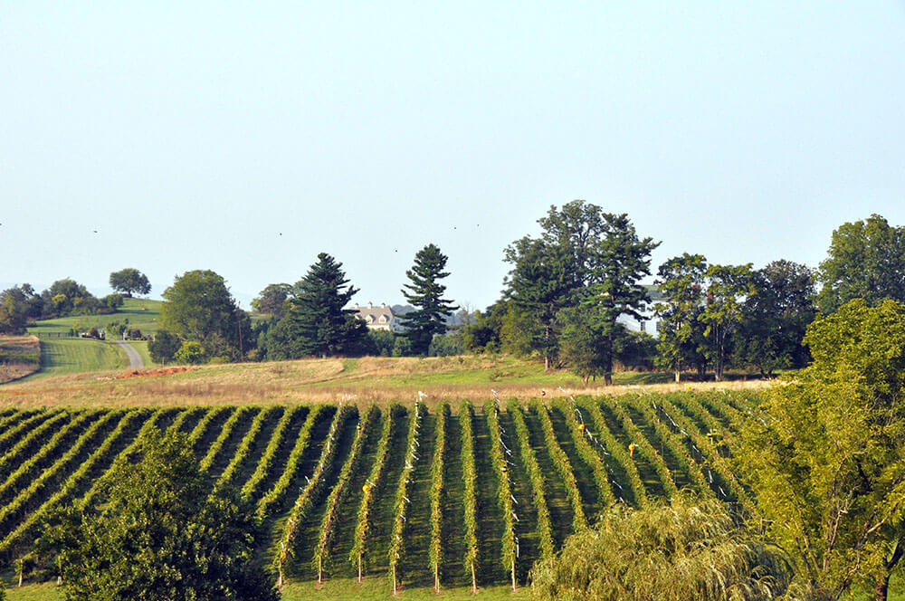 Winery Sale - Winery and vineyard for sale listed with price