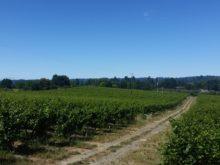 Image of Rare Green Valley AVA Vineyard & Winery