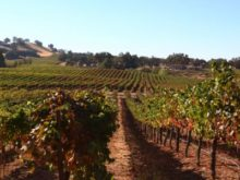 Image of Villa Toscano – Profitable Shenandoah Valley Winery Estate