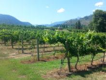 Image of Winery & Vineyard – Chelan County, WA