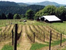 Image of Umpqua Valley, Central – Southern Oregon, 155 acre Vineyard Gem