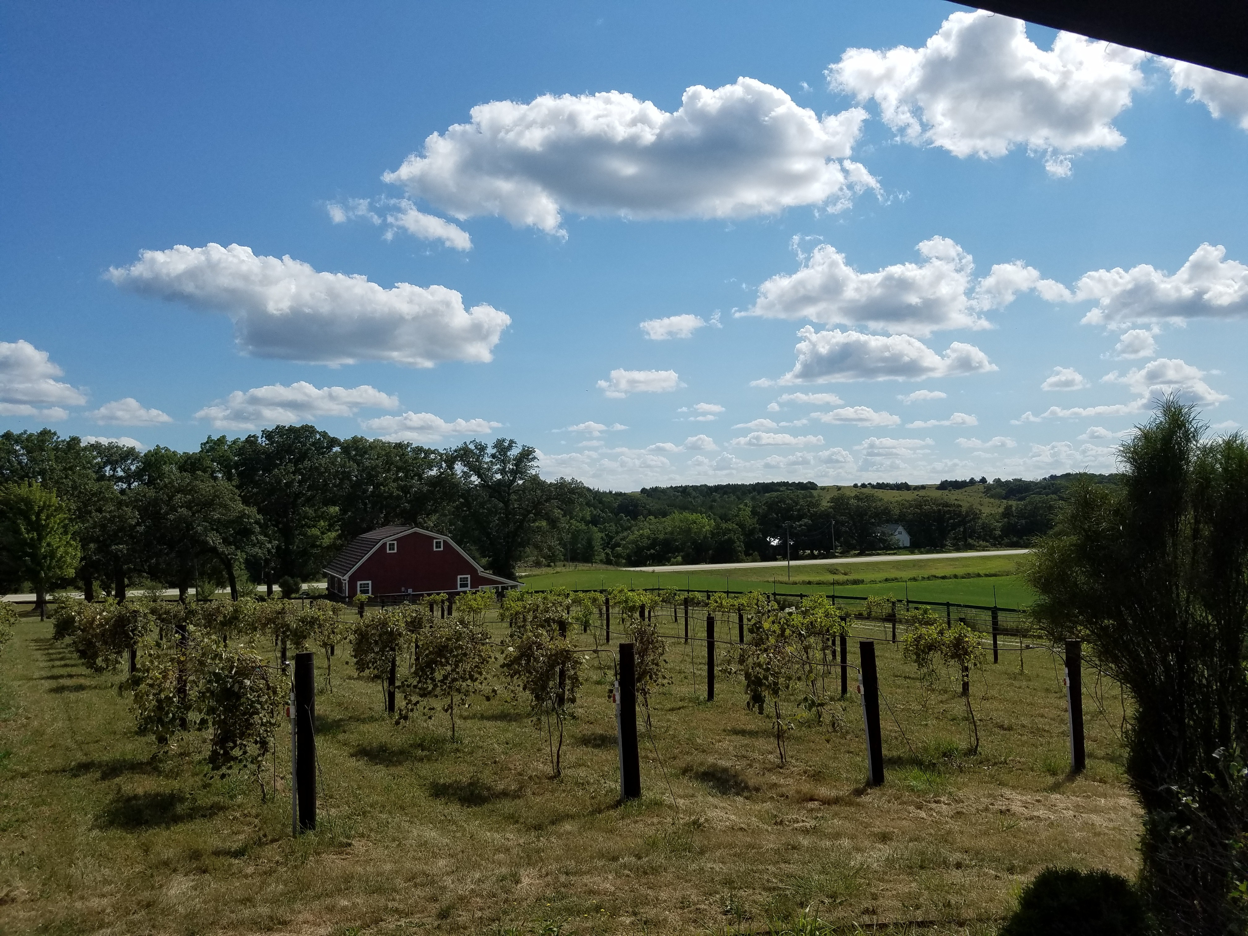Image of Panora Vineyard and Orchard, Iowa
