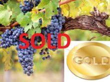 Image of Vinha e Adega para venda em Portugal
