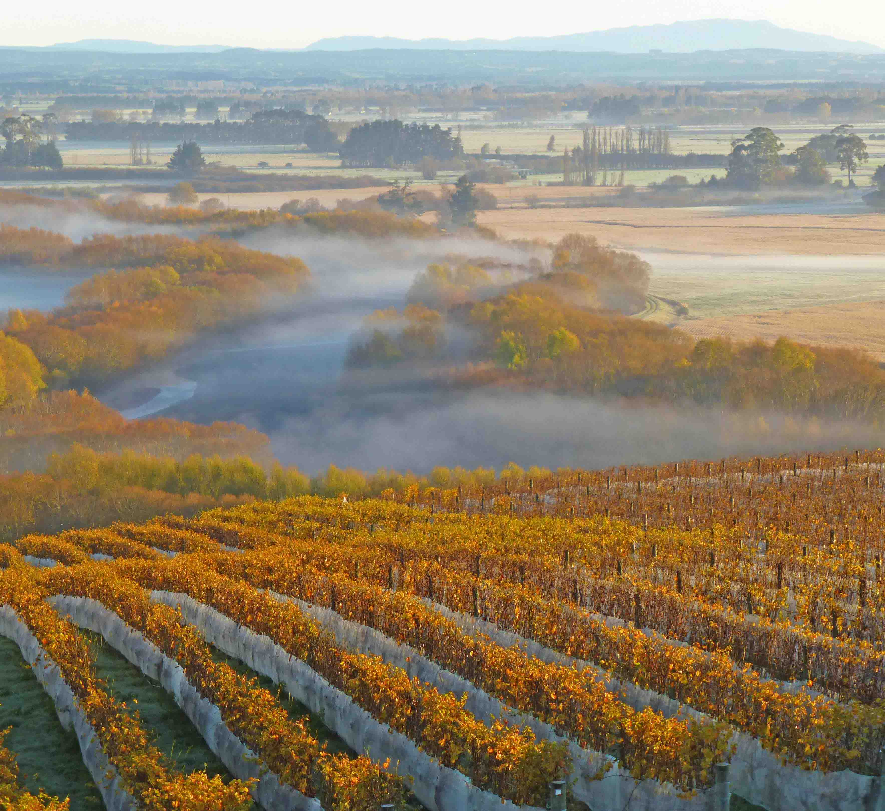 Image of Limestone Vineyard, Winery & Venue in New Zealand