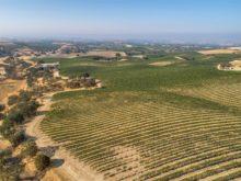 Image of 320+/- acre legacy-vineyard property