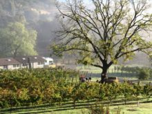 Image of For Sale Milagro Vineyard on the Wine Trail in the Santa Clara AVA.