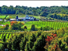 Image of Award Winning Turn-key Virginia Winery / Vineyard