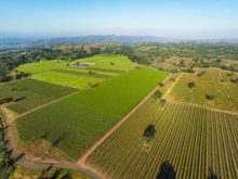 Image of Central Coast Winery, Brand + Vineyards