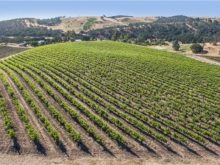 Image of Paso Robles 23+ acre Vineyard Property