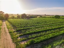 Image of Paso Robles 130 acres Vineyard for Sale