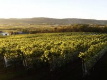 Image of Established Nova Scotia Winery & Vineyard