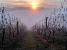 Image of Willamette Valley Vineyard, Home and Winery